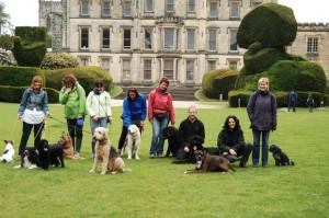 dog training at Elvaston Castle