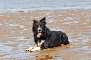 Fliss on the beach