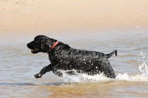 Jack on holiday dog training dog whisperer
